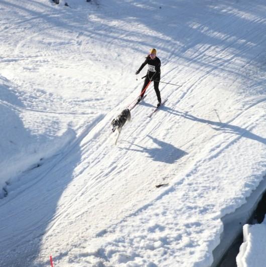 Elin på skidor  med en hund!