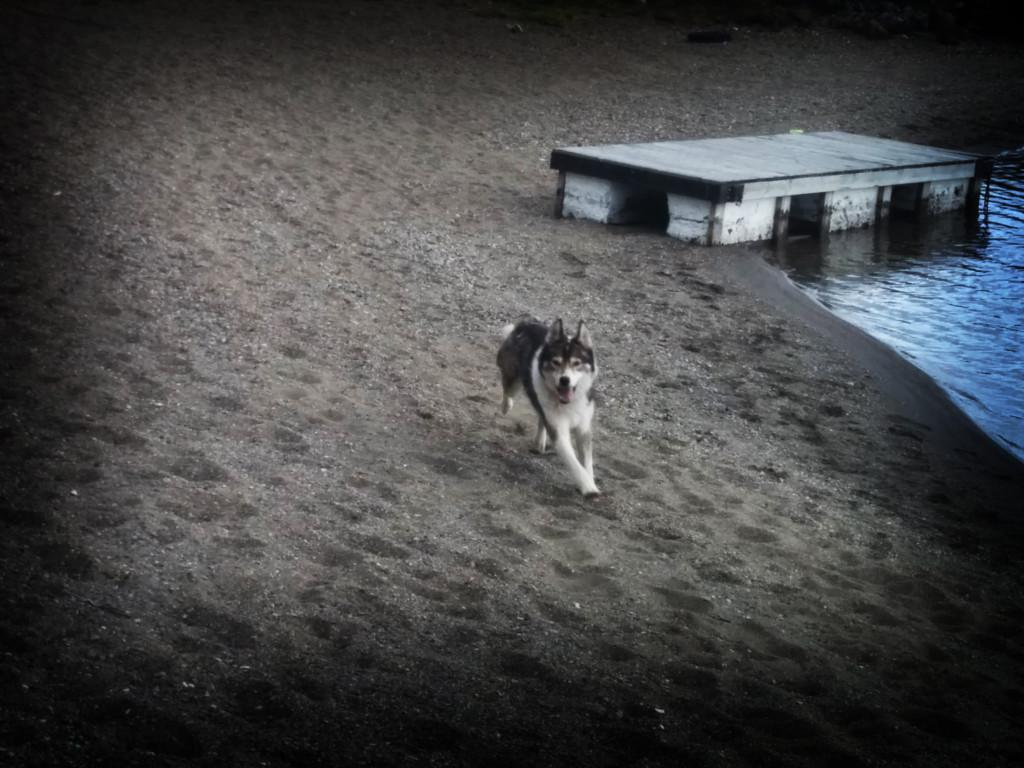 Chuck springer lös på badstranden!