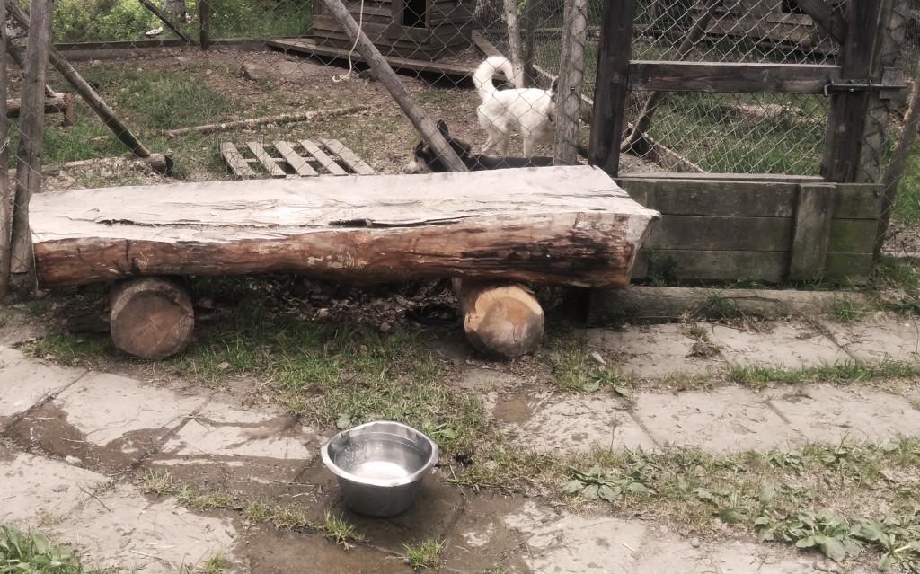 Ställt i ordning bänkarna i hundgården som Mats har fixat!